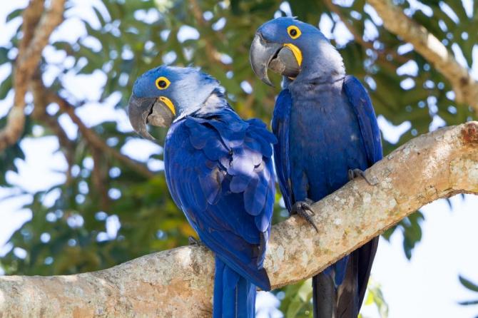 Resgate e Monitoramento da Fauna