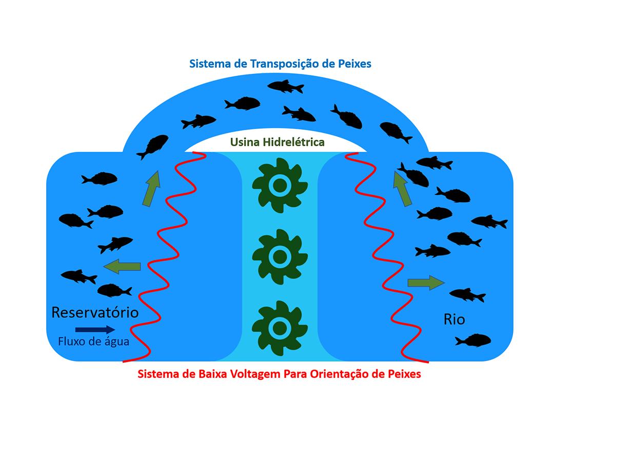 Sistema de Baixa Voltagem Para Orientação de Peixes