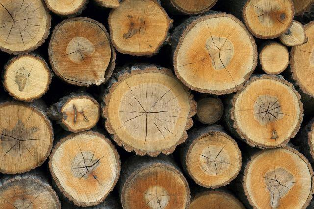 Hardwood And Softwood Trees ~ The difference between softwood and hardwood wood