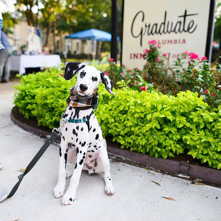 The Dogist x Graduate Hotels