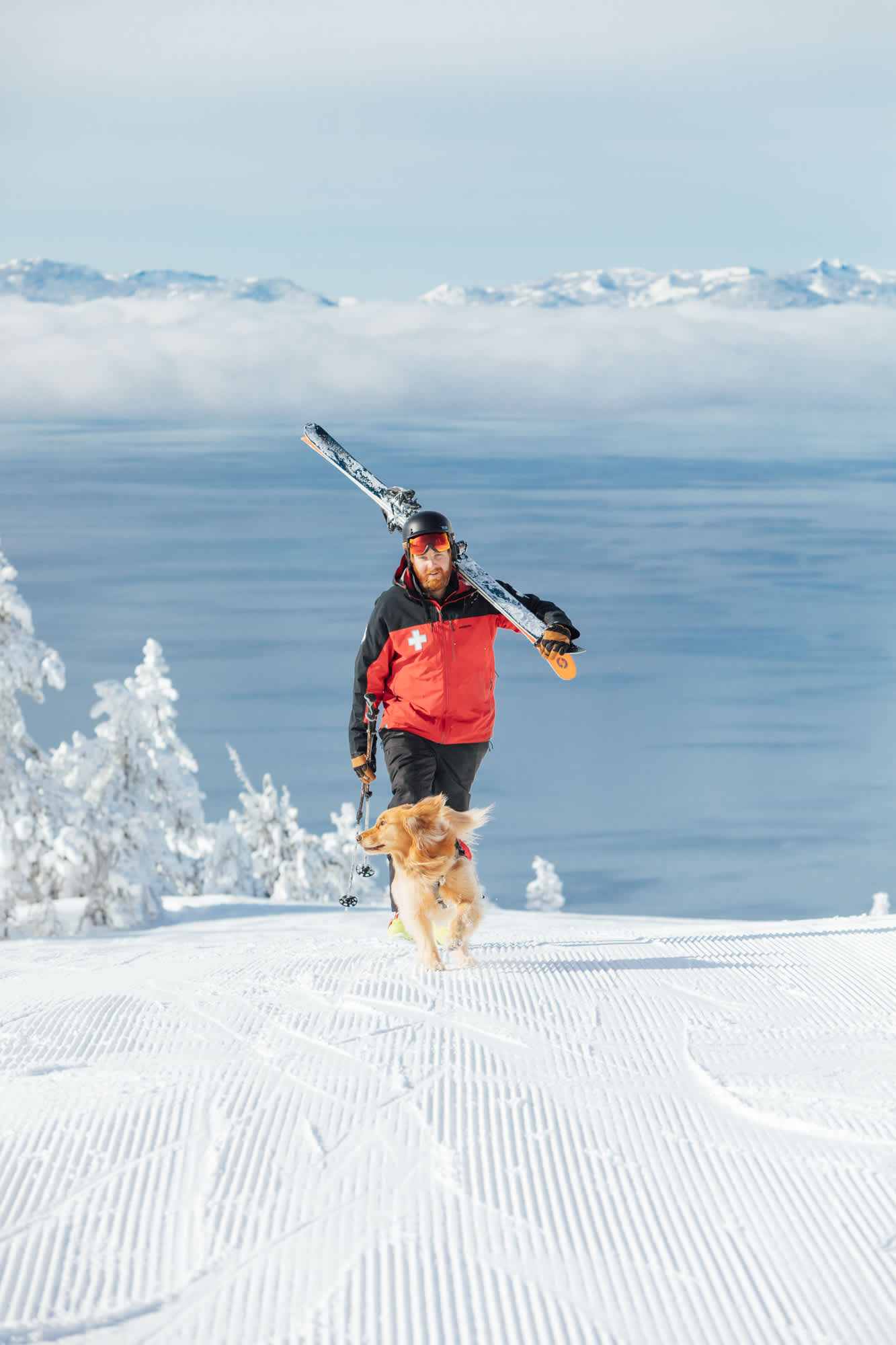 Avalanche Dogs