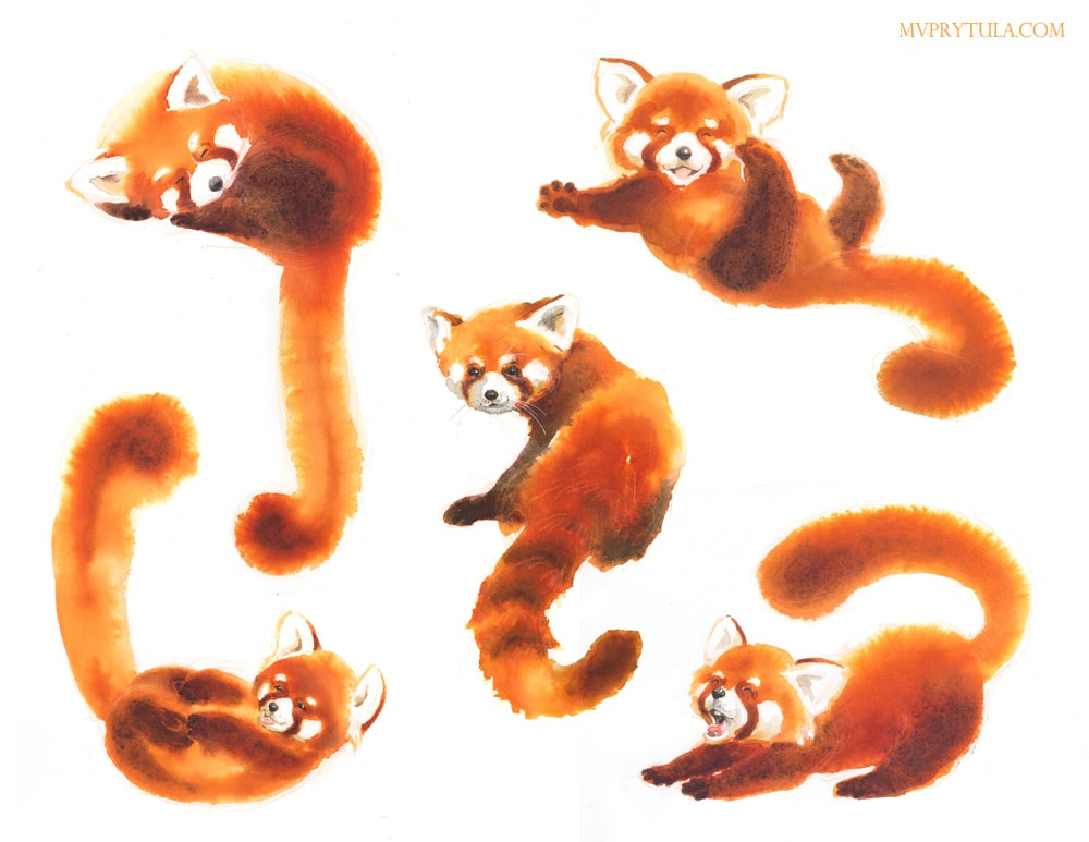"""Red Panda """"Untitled"""" picture book"""