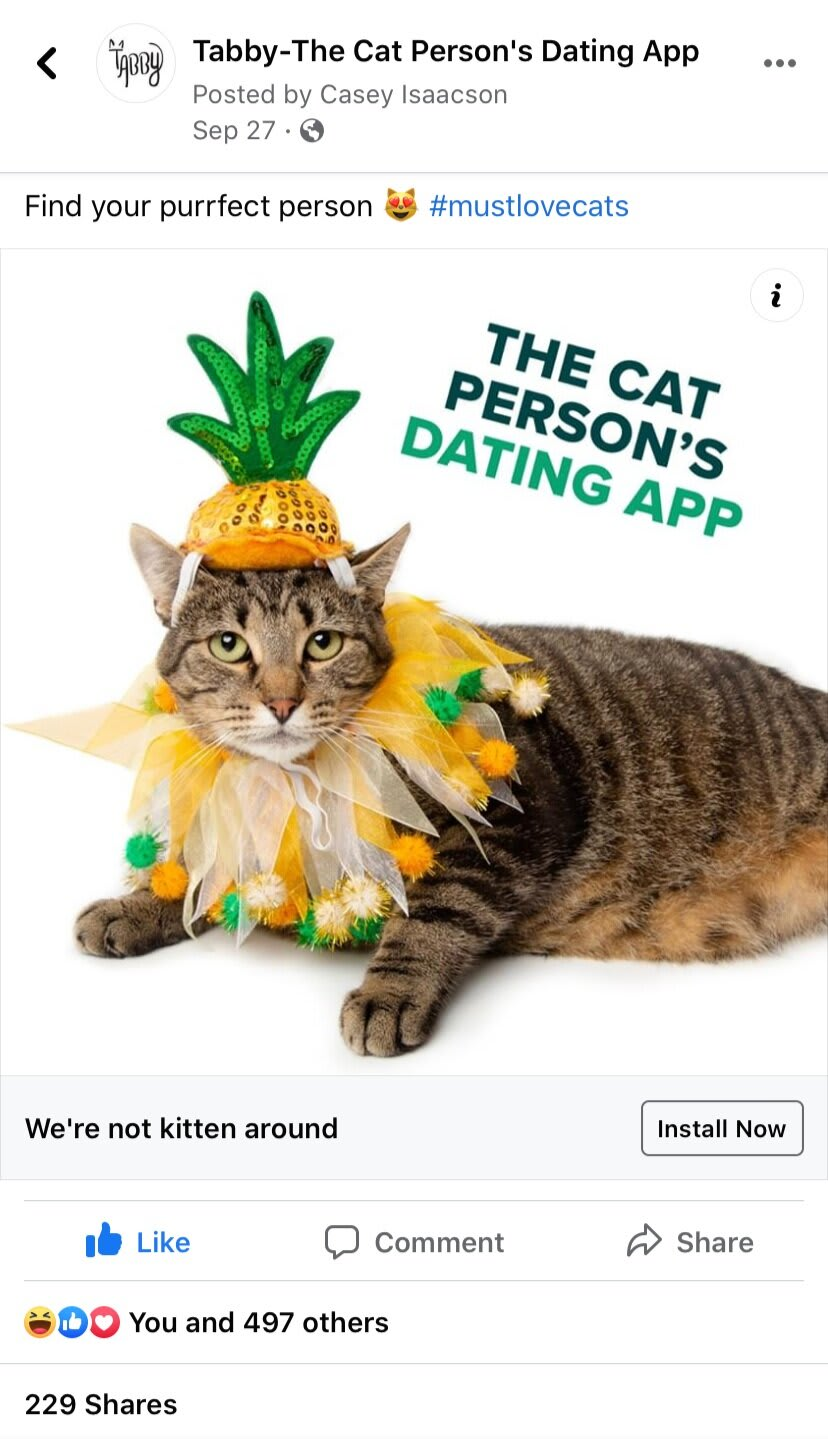 Tabby-The Cat Person's Dating App