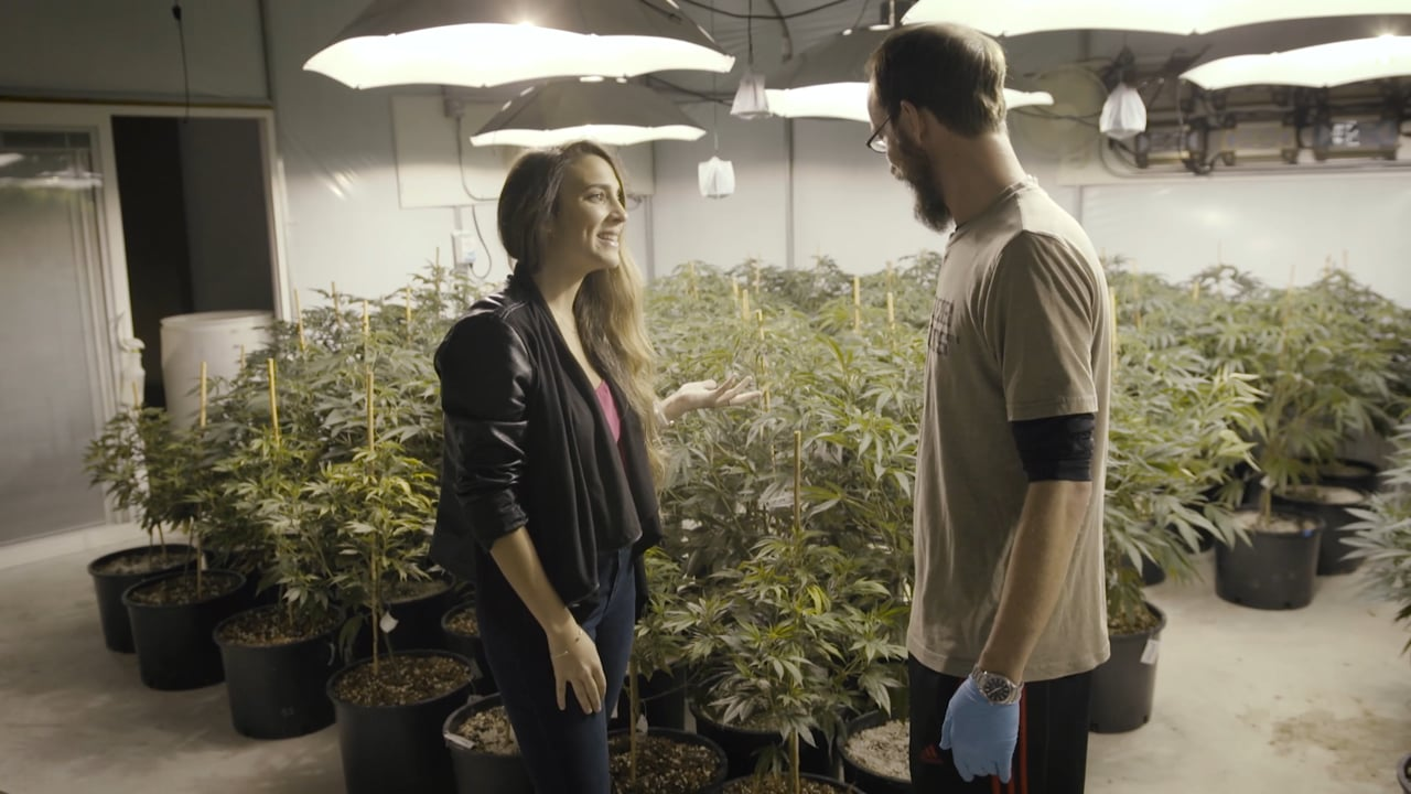 Leafly: The Art of Extraction