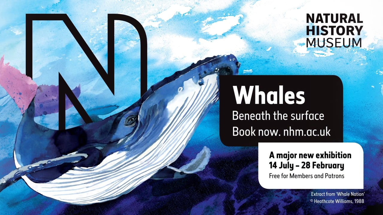 Natural History Museum - Whales: Beneath the surface