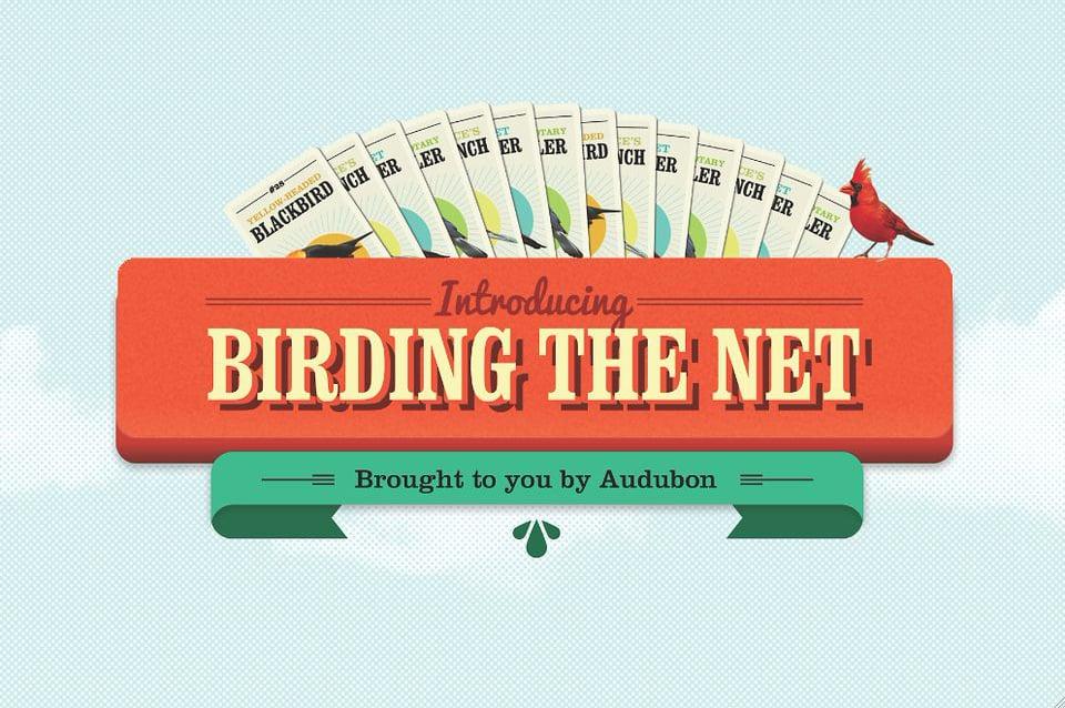 National Audubon Society - Birding the Net