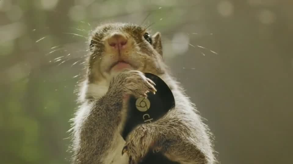 Google Chromecast - Squirrells