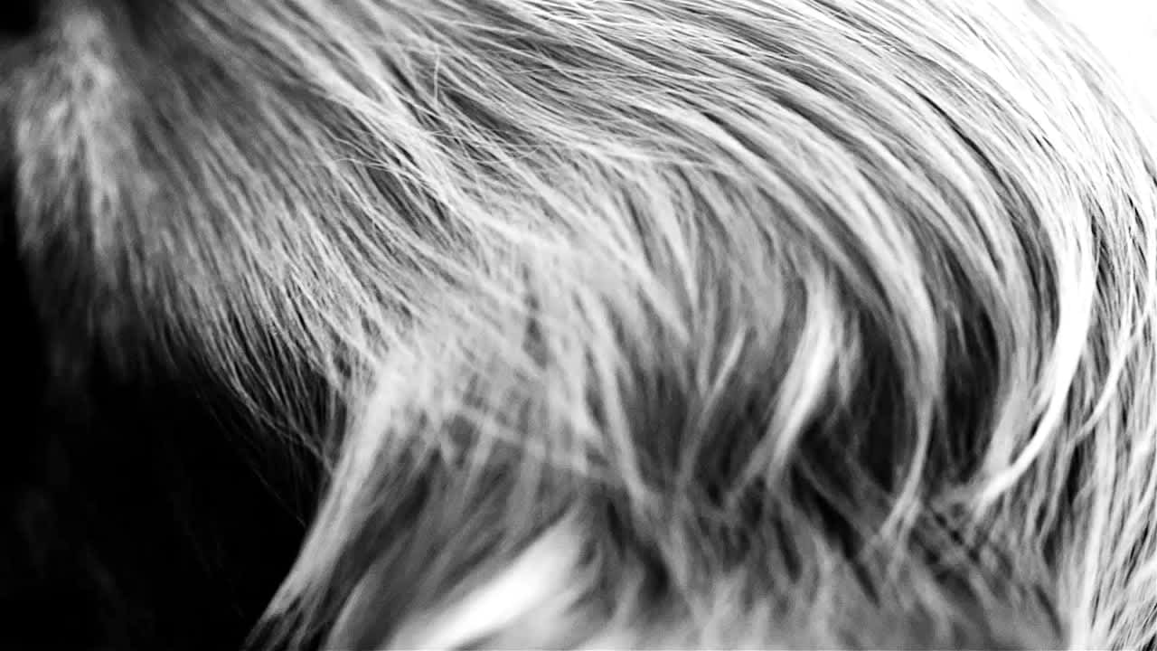 Royal Canin Sick Pet