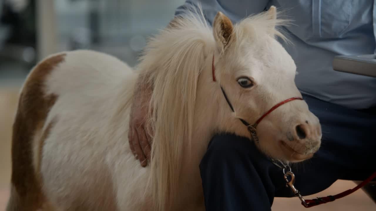 "TDAmeritrade ThinkOrSwim ""Comfort Pony"""