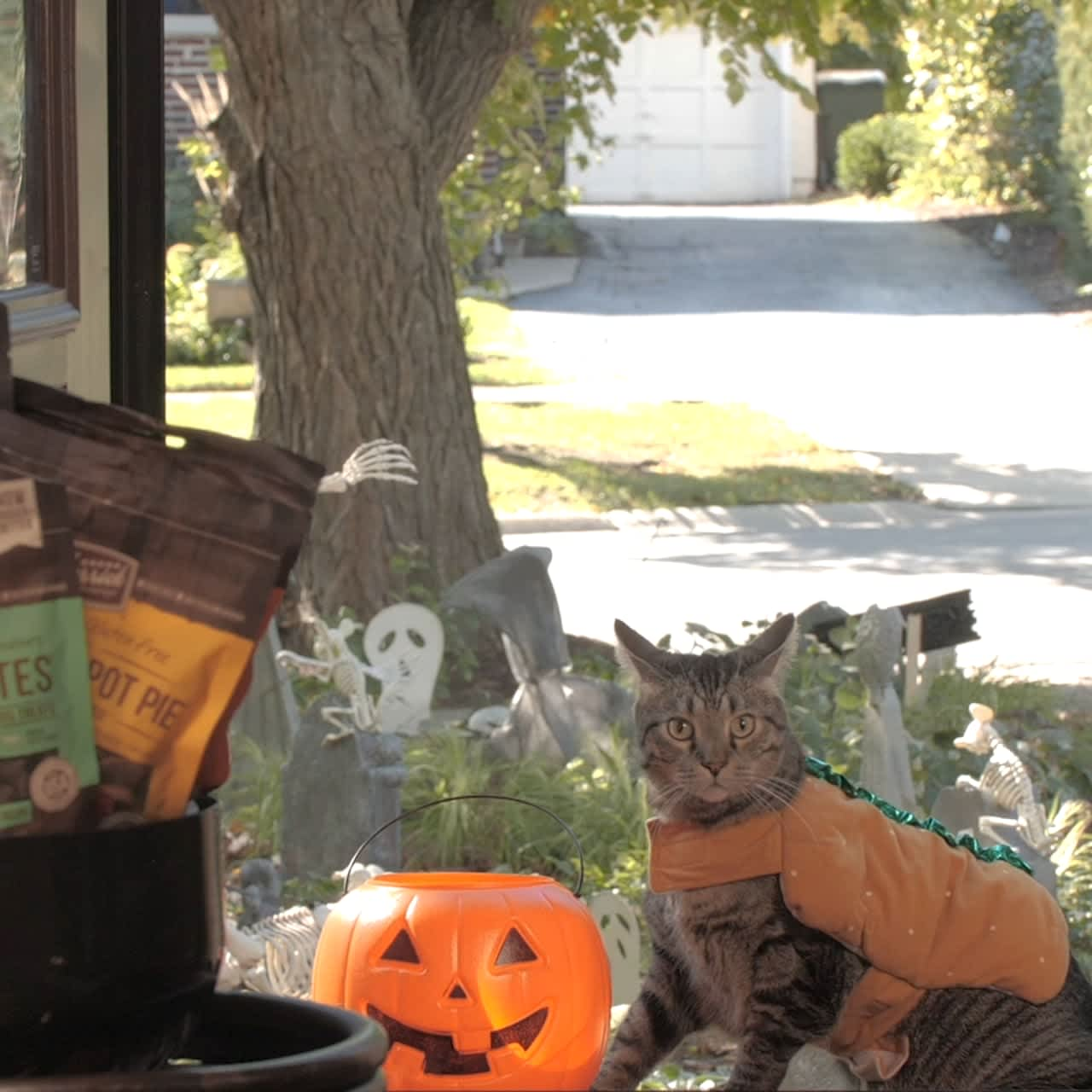 Merrick's Tricks for Treats Competition