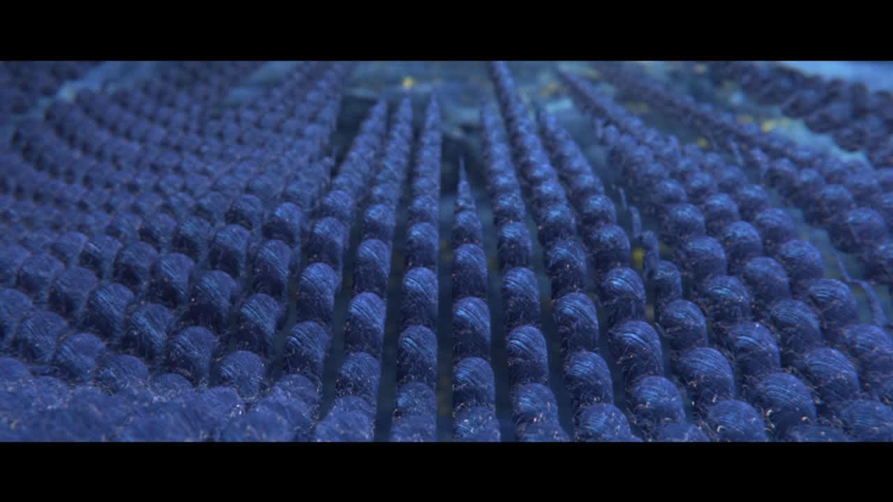 Lexus Structural Blue