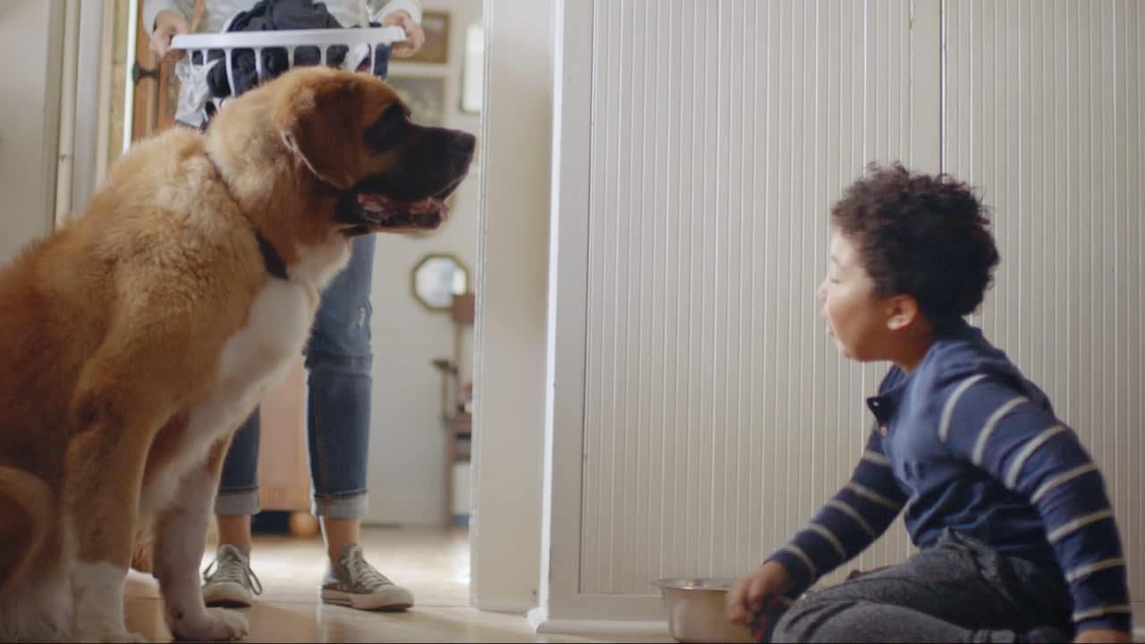 Clorox - Pet Playtime