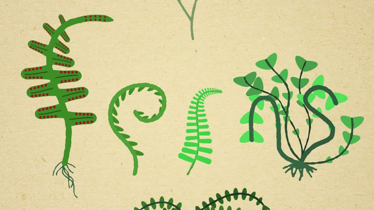 Ferns animated typography