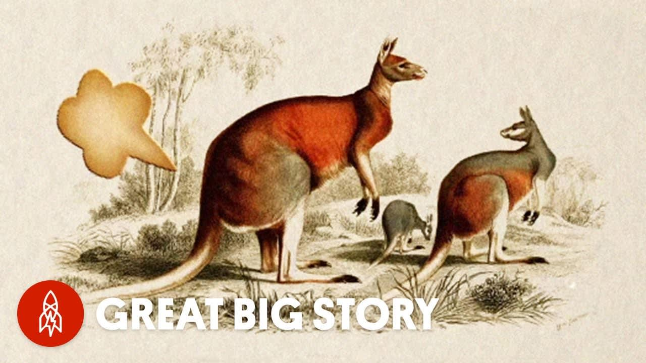 Everything You Wanted to Know About Animal Farts   Great Big Story