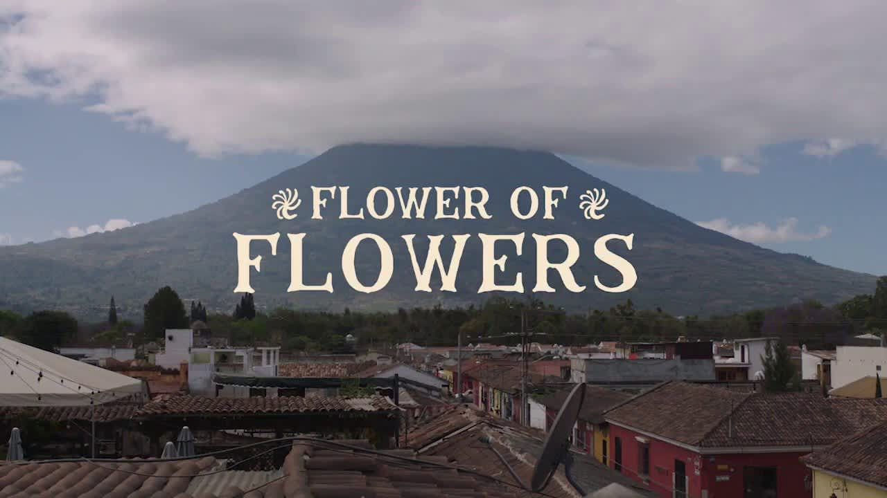 Flower of Flowers - Stumptown
