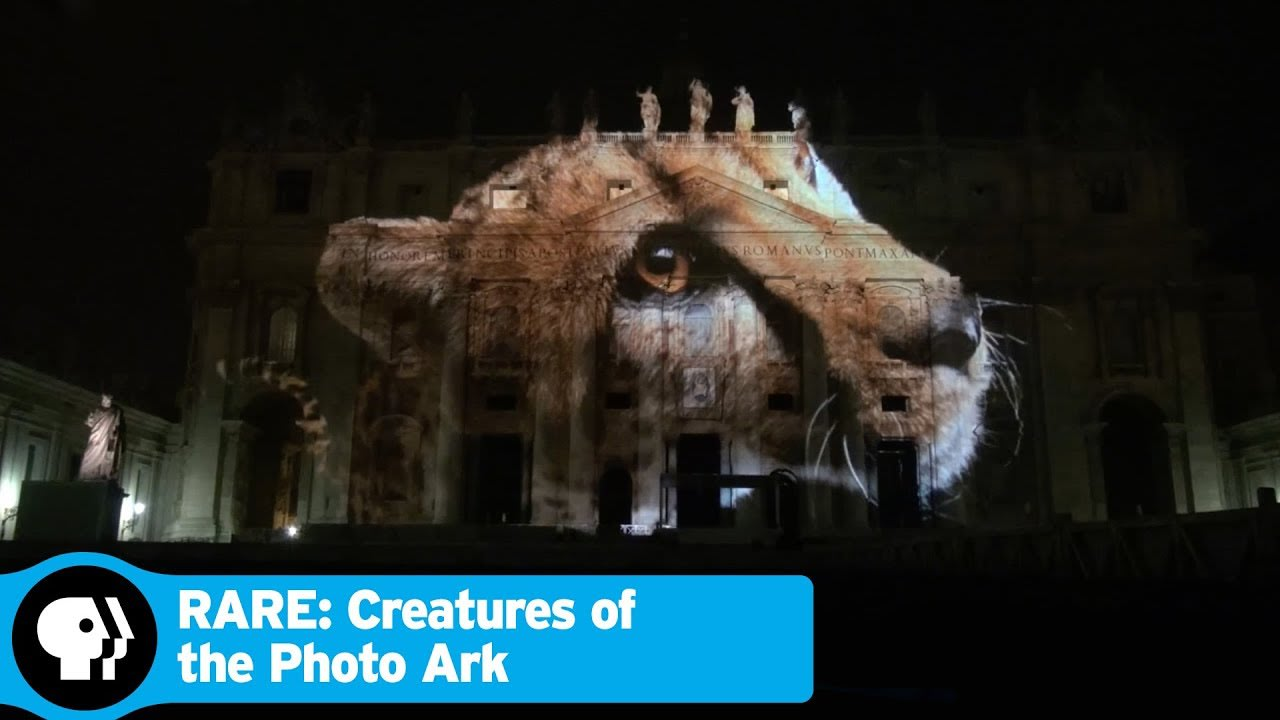 """PBS with National Geographic - """"RARE: Creatures of the Photo Ark"""""""