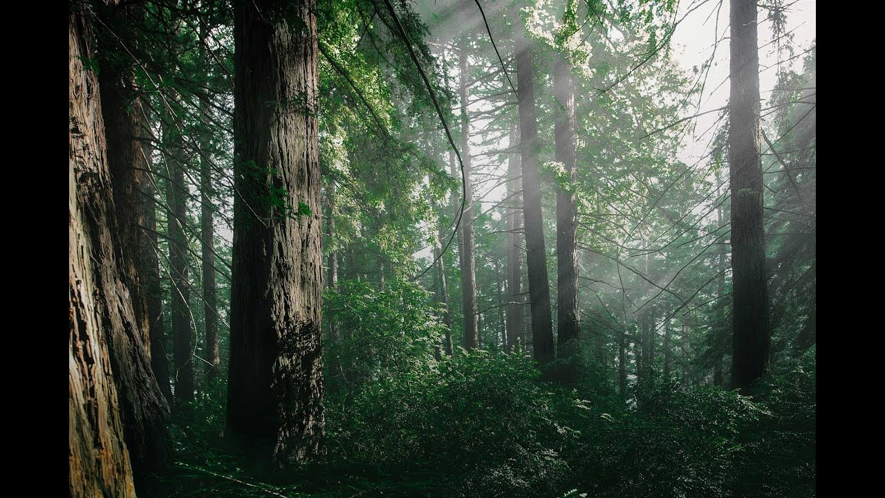 Rewind Nature - The North Face X REI
