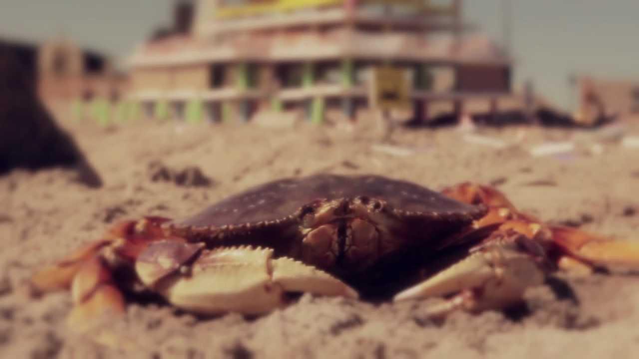 One Selfish Shellfish