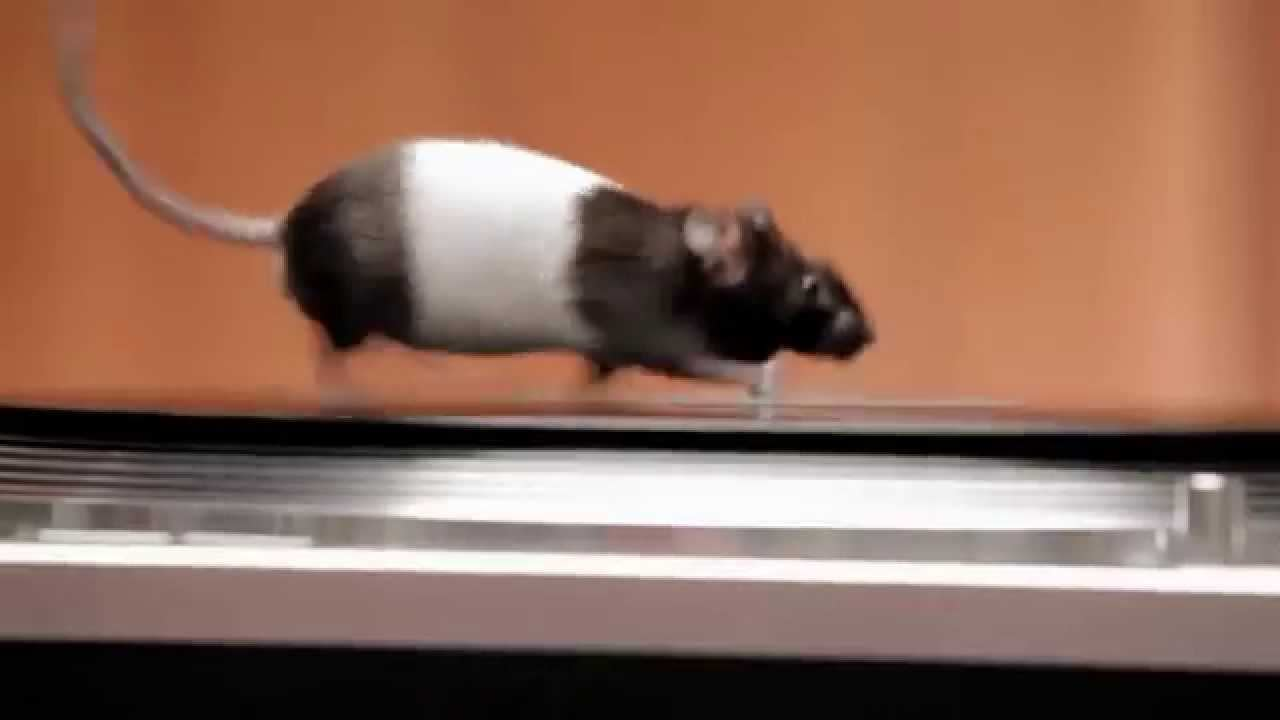 """Live Nation """"Rodents on Turntables"""""""
