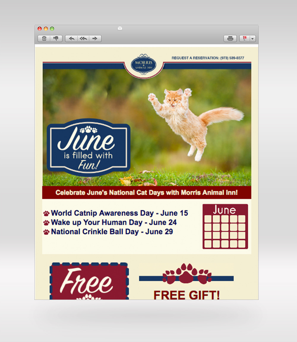 Email Design 'Curious Cats'