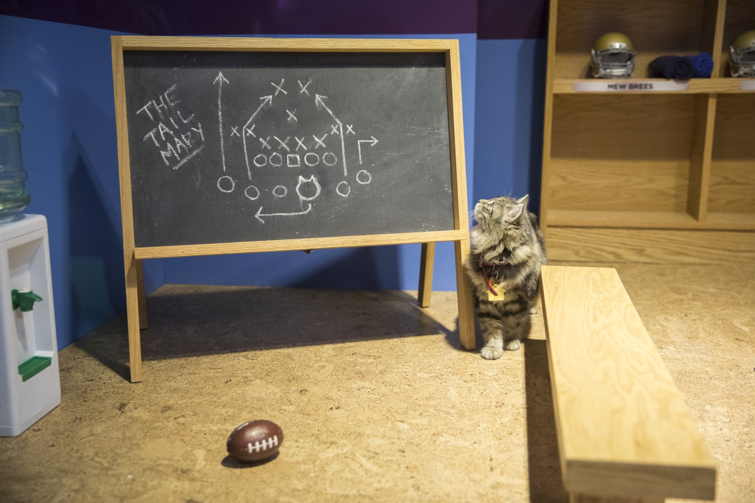Hallmark Channel Kitten Bowl: Super Bowl Activation