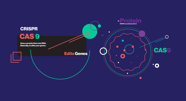 MIT Technology Review: Decoded Explainer Series