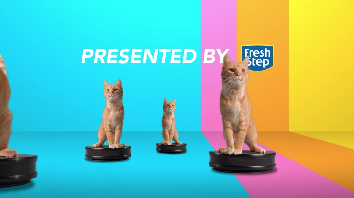 Fresh Step: #CATSCATSCATS