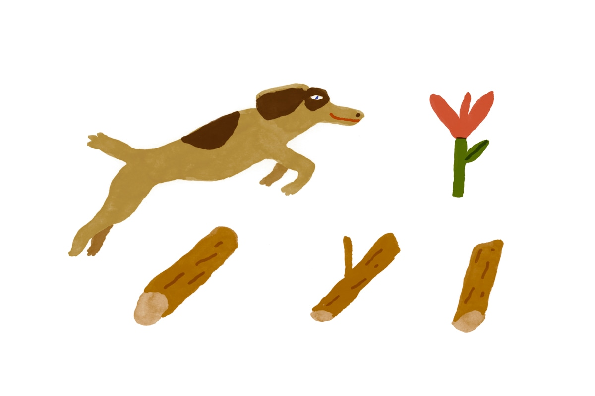 Wunderdogs Spring Exercises