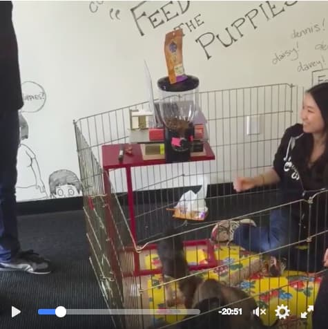 The Puppy Livestream: A Facebook-Connected Dog Feeder