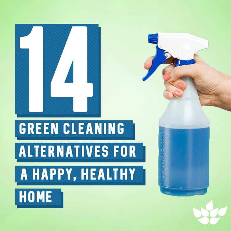 Green Cleaning Blog Article/Design