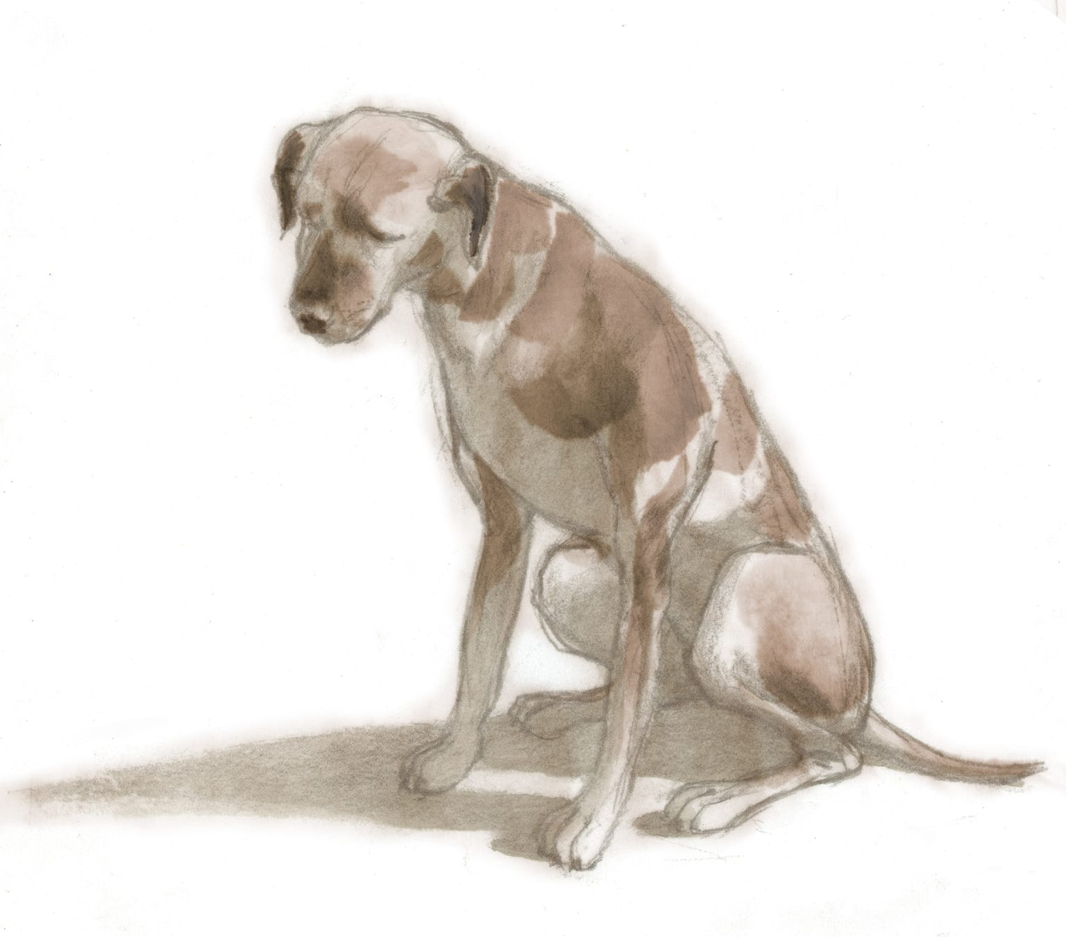 The Brown Dog