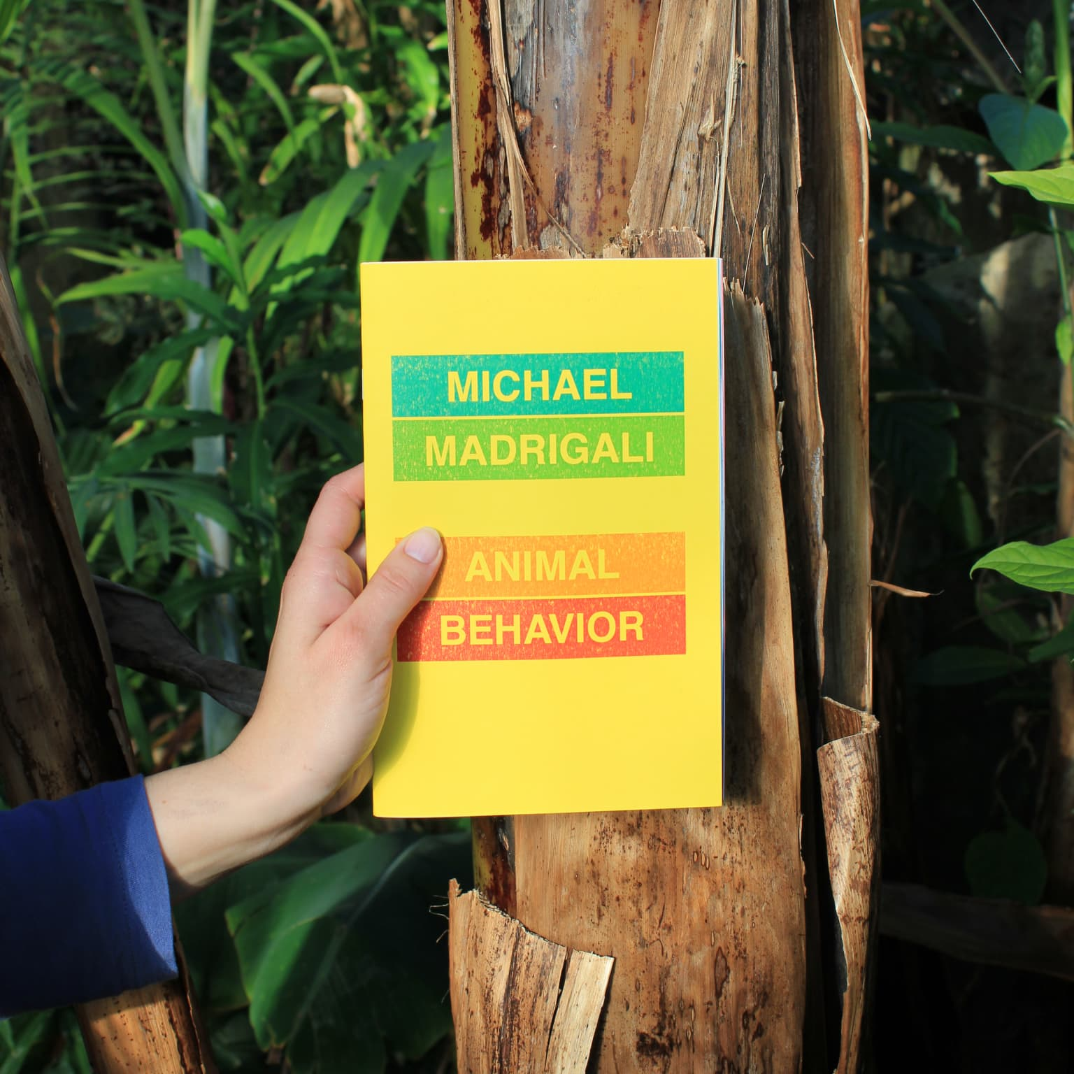 ANIMAL BEHAVIOR - Michael Madrigali