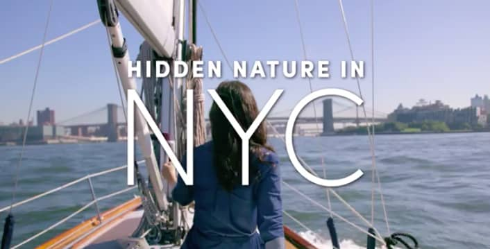 Hilton's Nature Filled Adventure in New York City with PopSugar