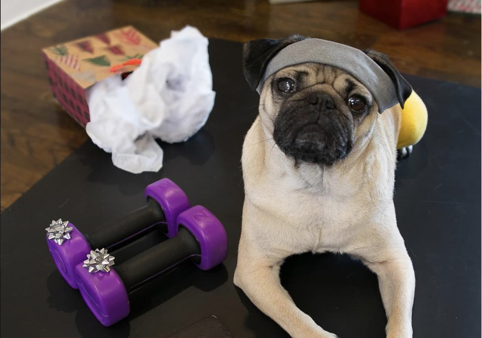 Planet Fitness x Doug the Pug