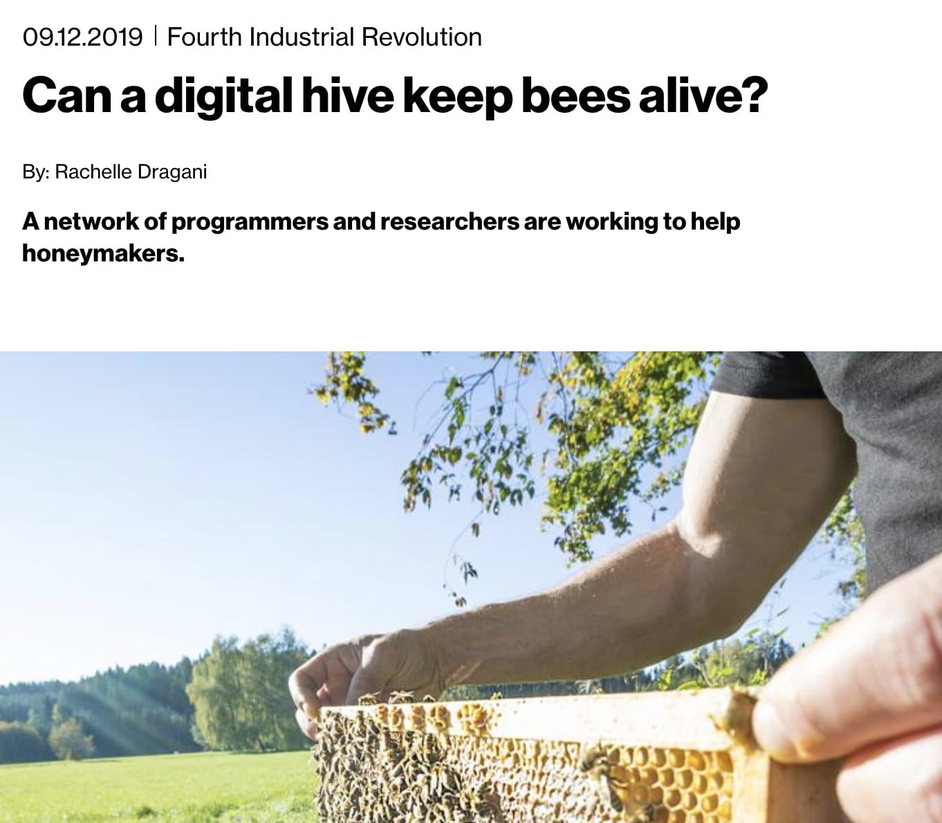Can a Digital Hive Keep Bees Alive?