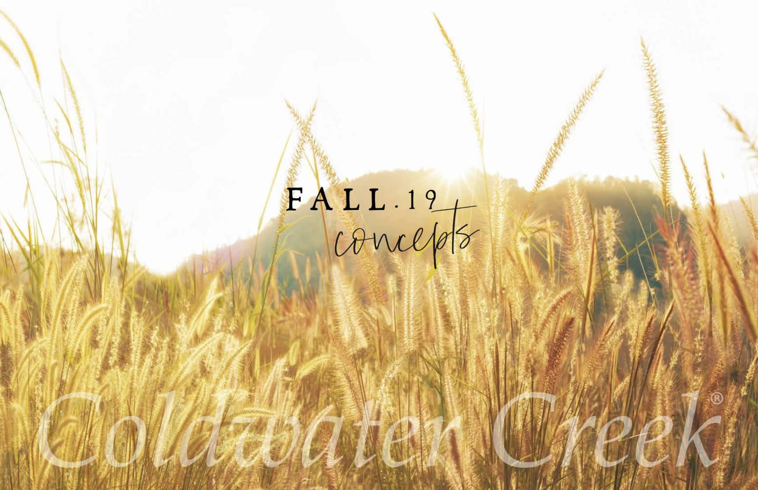 Coldwater Creek Fall 2019 Concept to Execution