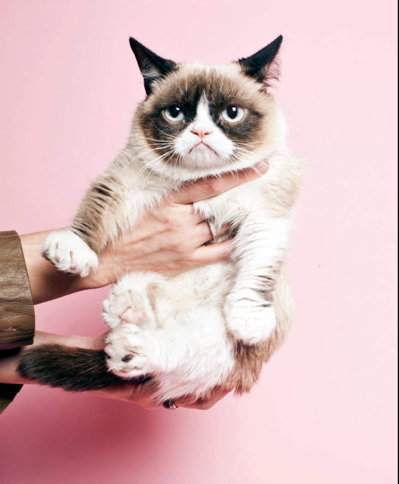 Grumpy Cat For Time Magazine