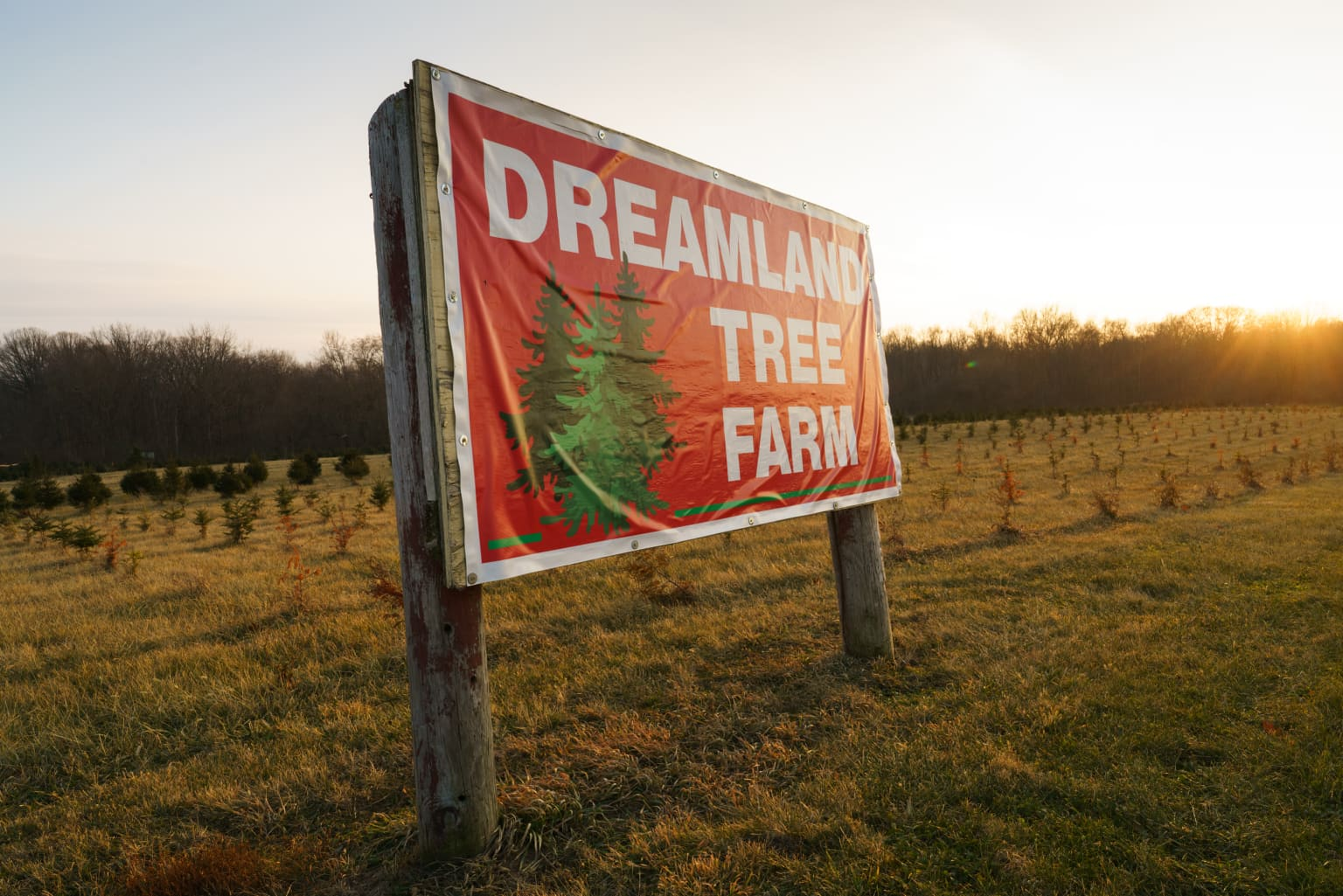 Christmas Tree Farms / NY Times