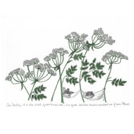 Cow Parsley Mice Print image