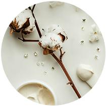 White flower with cream