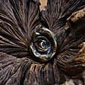 Sculptural Study Of An Eye Pendant image
