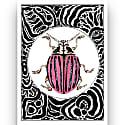 Rose Beetle Print image