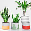 Half Full Hand-Painted Concrete Plant Pot In Olive Green image