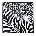Scarf Zebra image