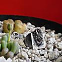 Meteorite Ring image