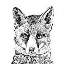 Rupert the Fox Print. image