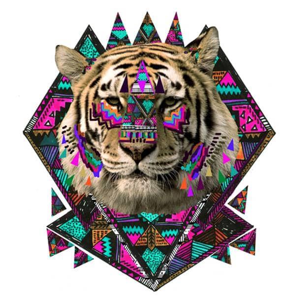 tiger kris tate