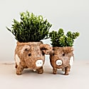 Coco Coir Animal Planter Baby Country Pig image