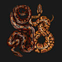 Antique Python & Viper Fine Art Print A3 image