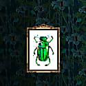 Beetle In The Rain Gold Print image